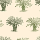 Pattern of the small tropical palm trees Stock Photography