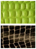 Pattern snake skin leather Stock Photography