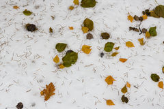 Pattern from snow and leaves Stock Images