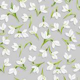 Pattern with snowdrops Stock Photos