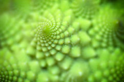 Pattern of spiral. Abstract pattern of spiral. Nature macro composition. Shallow depth-of-field royalty free stock photography