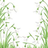 Pattern of spring flower. The first snowdrops Galanthus. Flowers for decoration. Vector illustration isolated on white background. Web site page and mobile app Stock Image