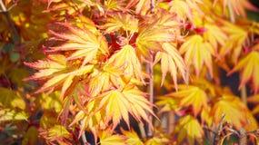 Pattern, spring leaf. Royalty Free Stock Images