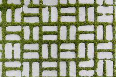 Pattern with a sprouted grass Royalty Free Stock Photo