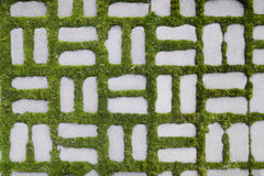 Pattern with a sprouted grass I Royalty Free Stock Image