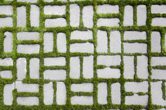Pattern with a sprouted grass II Royalty Free Stock Image