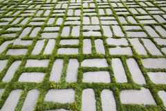 Pattern with a sprouted grass V Stock Photos