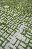 Pattern with a sprouted grass VI Royalty Free Stock Photo