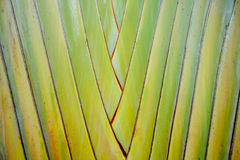 Pattern of stems palm Aligned in rows Stock Photo