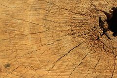 Pattern of stumps. Trees are being cut and see the details of the stumps Stock Photo