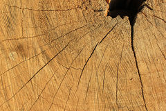 Pattern of stumps Royalty Free Stock Images