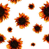 Pattern with sunflowers Royalty Free Stock Images