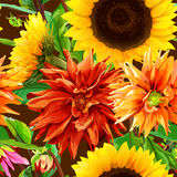 Pattern 2 of sunflowers with dahlias Stock Image
