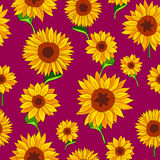 Pattern of sunflowers. Summertime Stock Images
