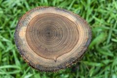Pattern on teak stump Stock Photo