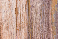 Pattern of teak wood. Stock Photo