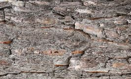 Pattern & Texture from bark of a Royalty Free Stock Photo