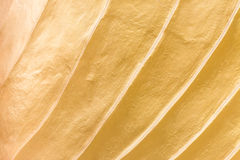 Pattern and texture of gold Royalty Free Stock Image