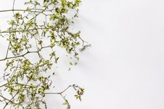 Pattern texture with green dry leaves hop on white background. Flat lay, top view minimal concept royalty free illustration