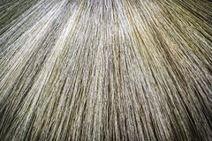 Pattern  and texture of nature broom Stock Photography