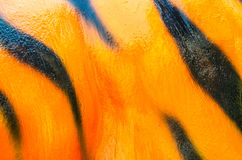 Pattern of a tiger skin texture and background Royalty Free Stock Photos
