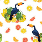 Pattern with toucan and fruits. Vector seamless texture. Stock Images