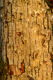 The pattern of tree bark. Background. Beautiful texture. Royalty Free Stock Photography