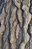 The pattern of tree bark. Background. Beautiful texture. Stock Image