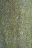 The pattern of tree bark. Background. Beautiful texture. Stock Photos