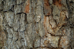 The pattern of tree bark. Background. Beautiful texture. Royalty Free Stock Image