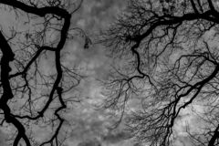 Pattern of tree limbs on a cloudy sky background in black and white. Tree limbs against a cloudy sky background in black and white stock image
