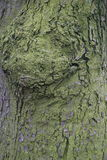 The pattern on the tree surface. Green moss on the grey bark of tree Stock Photography