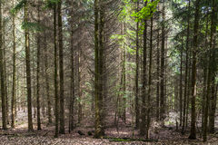 Pattern of trees in forest Stock Images
