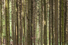 Pattern of trees in forest Stock Photography