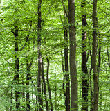 Pattern of trees in forest Stock Photo