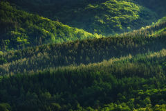 Pattern of trees and hills Royalty Free Stock Photos