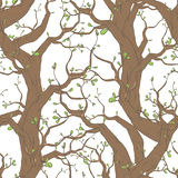 Pattern with trees. Seamless vector pattern with trees and branches Royalty Free Stock Photography
