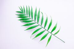 Pattern of tropical green leaves on white background. Flat lay, top view stock illustration