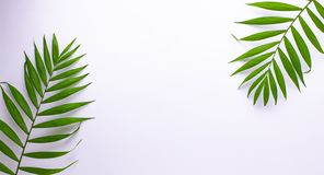 Pattern of tropical green leaves on white background. Flat lay, top view royalty free illustration