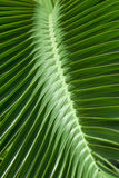 Pattern of tropical palm leaves. Stock Images
