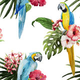 Pattern, tropical, watercolor Stock Image