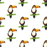 Pattern with tucan. Tucan on white background, toucans on bamboo, seamless pattern toucan a rainbow exotic bird Stock Photos