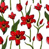 Pattern of tulips. Royalty Free Stock Image