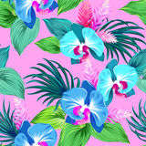 Pattern with vector orchids. Stock Photography