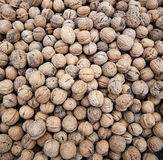 The pattern of the walnut Royalty Free Stock Photos