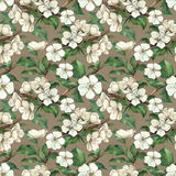 Pattern with watercolor apple flowers Stock Images