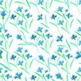 Pattern watercolor blue cornflower border on white stock illustration