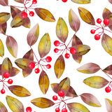 Pattern with watercolor branches with the red berries and leaves, bird-cherry tree Royalty Free Stock Photos