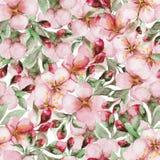 Pattern of watercolor sakura flowers Royalty Free Stock Image