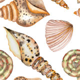 A pattern with the watercolor shells Stock Photo
